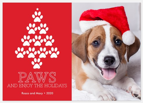 Cheerful Paws Holiday Photo Cards