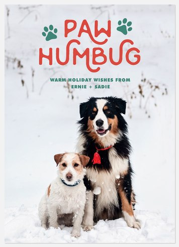 Paw Humbug Holiday Photo Cards