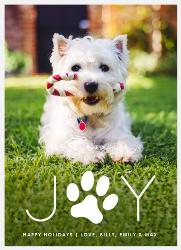 Pawfect Joy Holiday Photo Cards