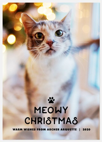 Purrfect Christmas Holiday Photo Cards