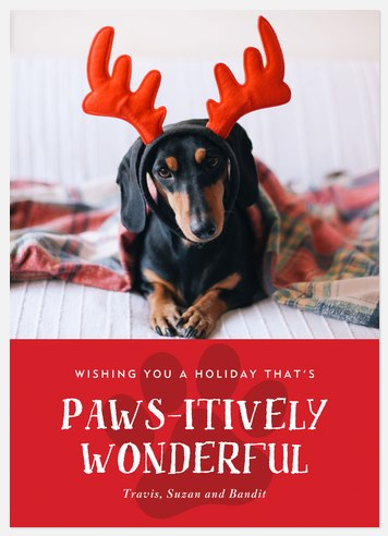Pawsitively Wonderful Holiday Photo Cards